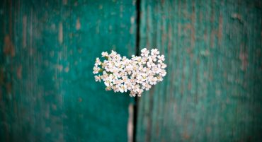 Keeping Yourself Pure through Understanding the Heart Part 2